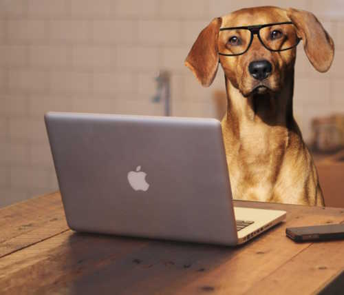 Dog Glasses Apple Laptop iPhone