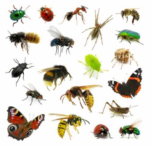 Bugs TechieSense.com